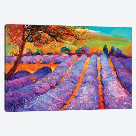 Lavender Fields III Canvas Print #DPT29} by borojoint Canvas Art