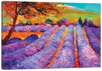 Lavender Fields III Canvas Art Print