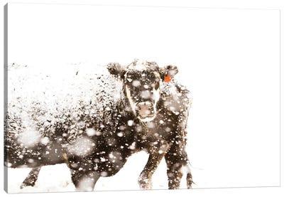 Cattle Canvas Art Print