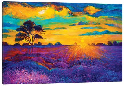 Lavender Fields IV Canvas Art Print