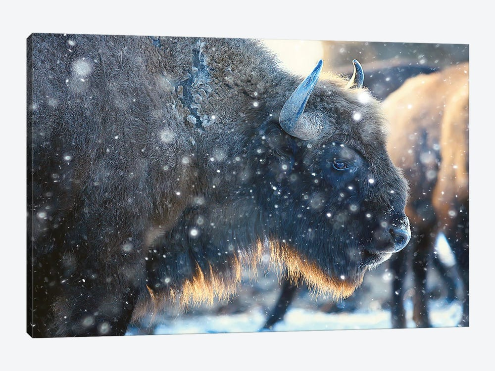 Bison In Snowy Forest by xload 1-piece Canvas Art Print