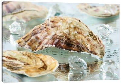 Oyster Shell Canvas Art Print