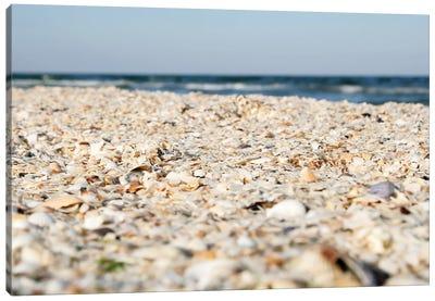 Sand And Shells On Beach. Canvas Art Print