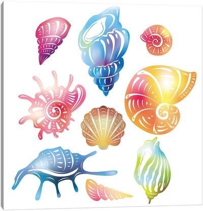 Colored Seashell Canvas Art Print