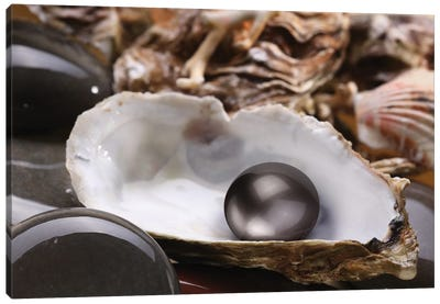 Image Of A Black Pearl In The Shell On Wet Pebbles. Canvas Art Print