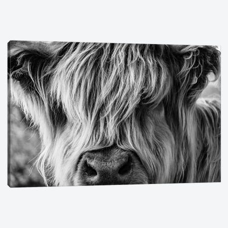 A Very Long-Haired Cow Looks Through Its Hair Canvas Print #DPT32} by charlietyack Canvas Art Print
