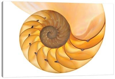 Nautilus Shell Canvas Art Print
