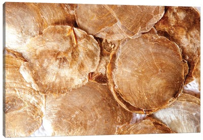 Mother Of Pearl Brown Round Shells Canvas Art Print