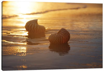 Golden Sunrise And Nautilus Shells In The Sea Canvas Art Print