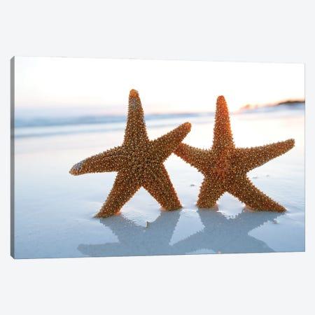 Sea Star Starfish Silhouette On Sunrise Beach, Shallow Dof Canvas Print #DPT343} by Depositphotos Canvas Wall Art