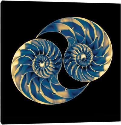 Nautilus Shells On Black Canvas Art Print