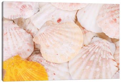 Sea Shells Background Canvas Art Print