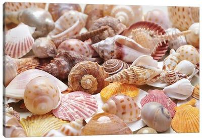 Nice Sea Shells Canvas Art Print