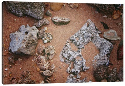 Rocks And Coral On The Sand Canvas Art Print