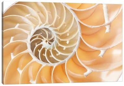 Nautilus Shell Section, Perfect Fibonacci Pattern Background Canvas Art Print