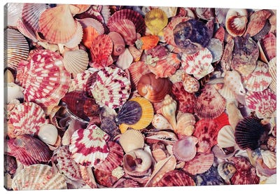 Beautiful Marine Background With Colorful Shells Of Different S Canvas Art Print