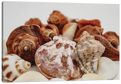 Sea Shells On A White Background Close Up Canvas Art Print
