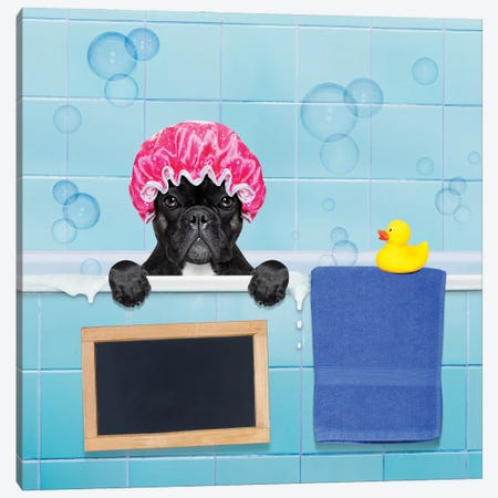 Dog In Shower II Canvas Print #DPT39} by damedeeso Canvas Print