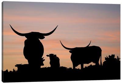 Longhorn Overlook Canvas Art Print