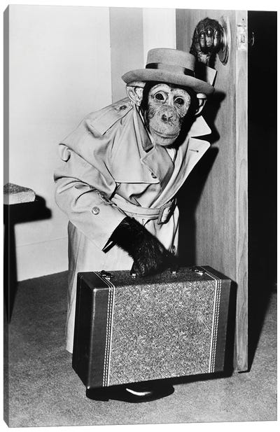 Chimpanzee In Coat And Hat Walking With A Suitcase Canvas Art Print