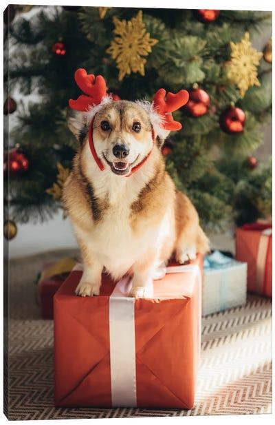 Welsh Corgi In Deer Horns Sitting On Gift Box Under Christmas Tree Canvas Art Print