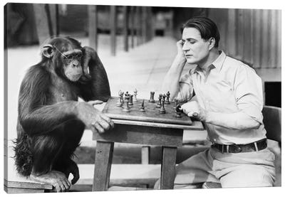 Man Playing Chess With Monkey Canvas Art Print