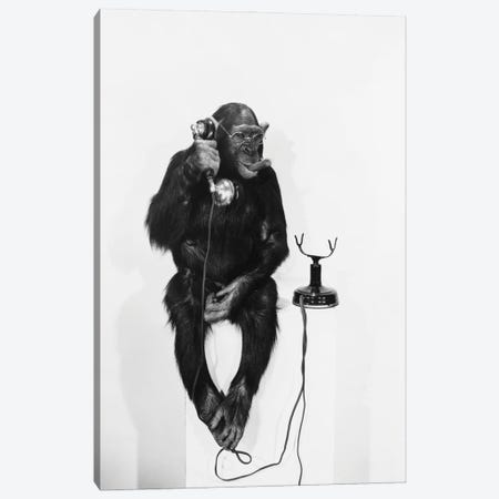Monkey On The Phone Canvas Print #DPT58} by everett225 Canvas Art Print