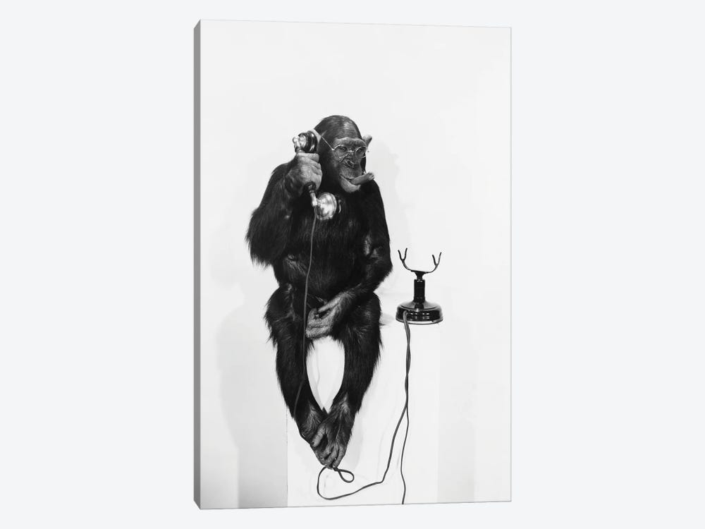 Monkey On The Phone by everett225 1-piece Canvas Art
