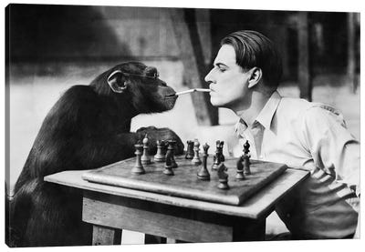 Young Man And A Chimpanzee Smoking Cigarettes And Playing Chess Canvas Art Print