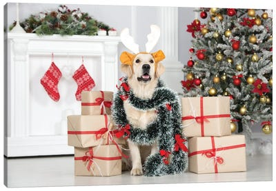 Golden Retriever Dog Posing Indoors With Christmas Decorations Canvas Art Print