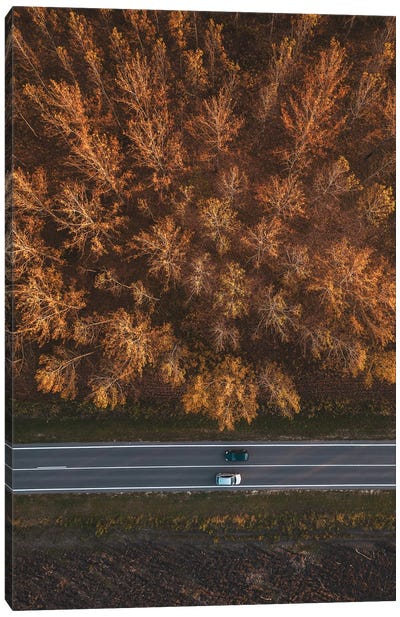 Traffic On The Road Through Autumnal Aspen Tree Forest Canvas Art Print