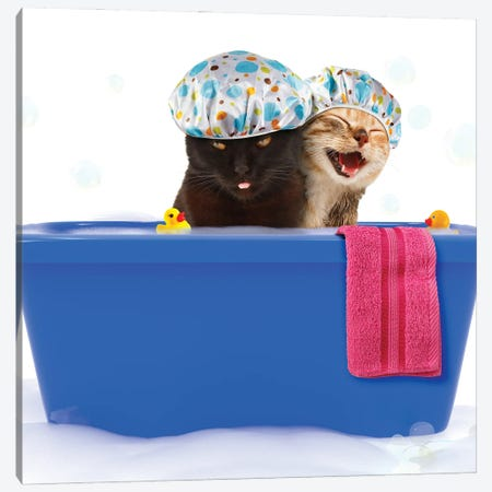 Two Funny Cats Are Taking A Bath In A Colorful Bathtub With Toy Duck. Canvas Print #DPT65} by funny cats Canvas Print