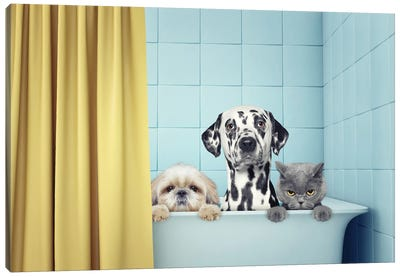 Two Dogs And Cat In The Bath Canvas Art Print