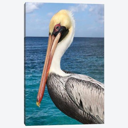 Pelican Canvas Print #DRC144} by Julie Derice Canvas Print