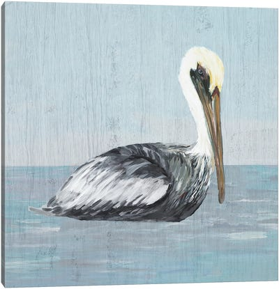 Pelican Wash III Canvas Art Print