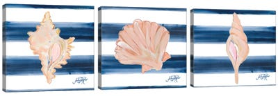 Nautical Shell Triptych Canvas Art Print