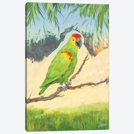 Tropic Bird in Paradise II Canvas Print #DRC59} by Julie Derice Canvas Art Print