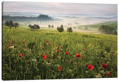 Tuscan Spring Canvas Art Print