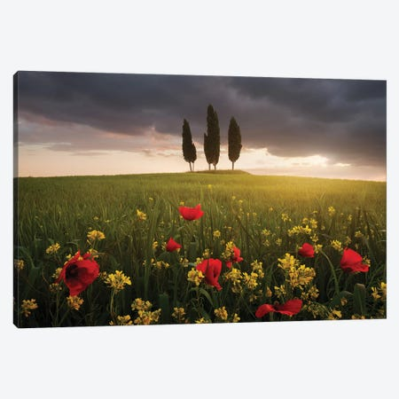 Blooming Tuscany Canvas Print #DRE2} by Daniel Řeřicha Art Print