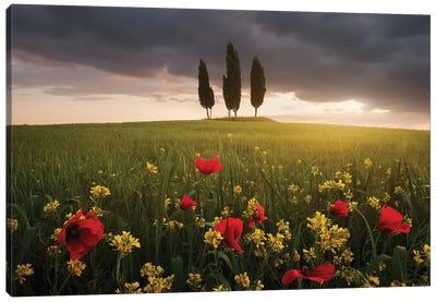 Blooming Tuscany Canvas Art Print