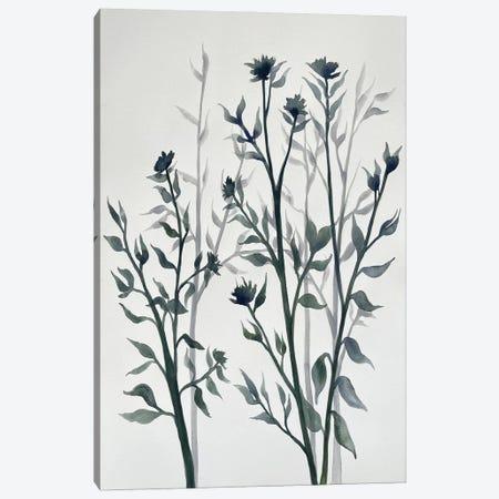 Botanical Inspiration II Canvas Print #DRI57} by Doris Charest Canvas Wall Art