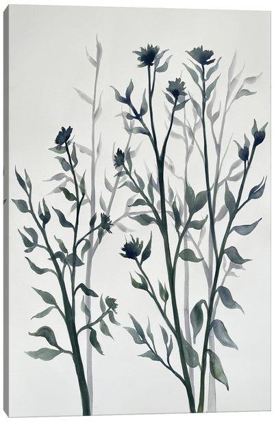 Botanical Inspiration II Canvas Art Print