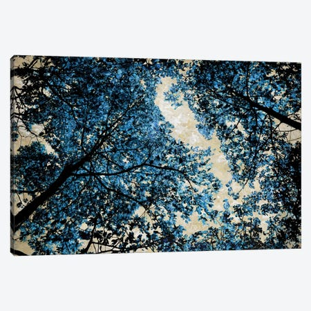 Blue Forest II Canvas Print #DRK2} by Derek Scott Art Print