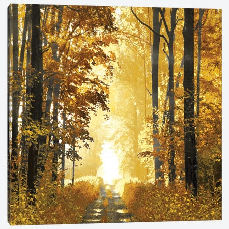 Sunlit Forest I Canvas Print #DRK4} by Derek Scott Canvas Artwork