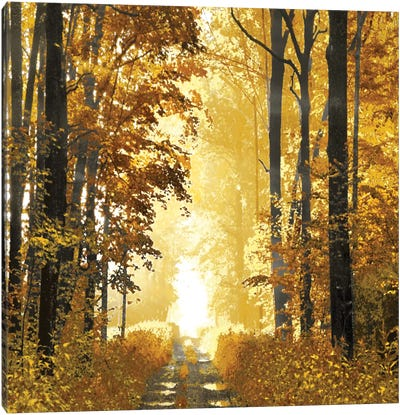 Sunlit Forest I Canvas Art Print