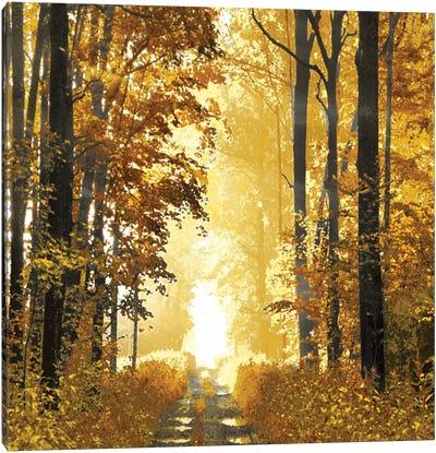 Sunlit Forest I Canvas Art Print