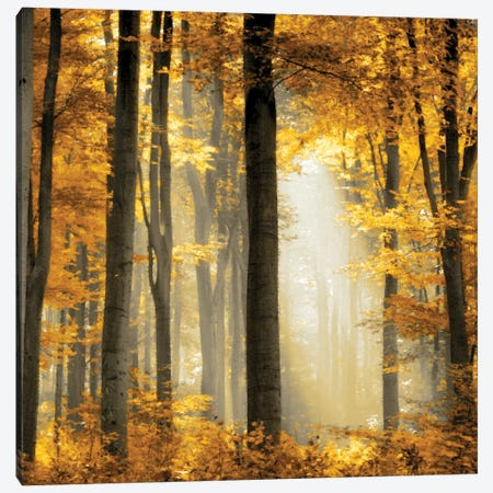 Sunlit Forest II Canvas Print #DRK5} by Derek Scott Canvas Wall Art