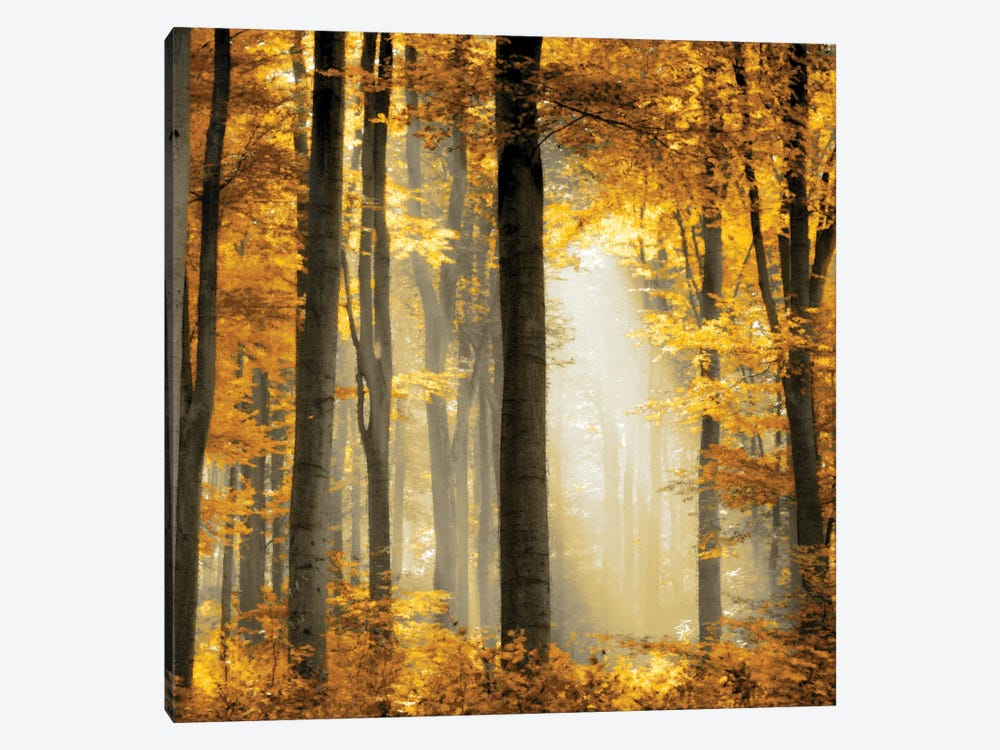 Sunlit Forest II by Derek Scott 1-piece Art Print