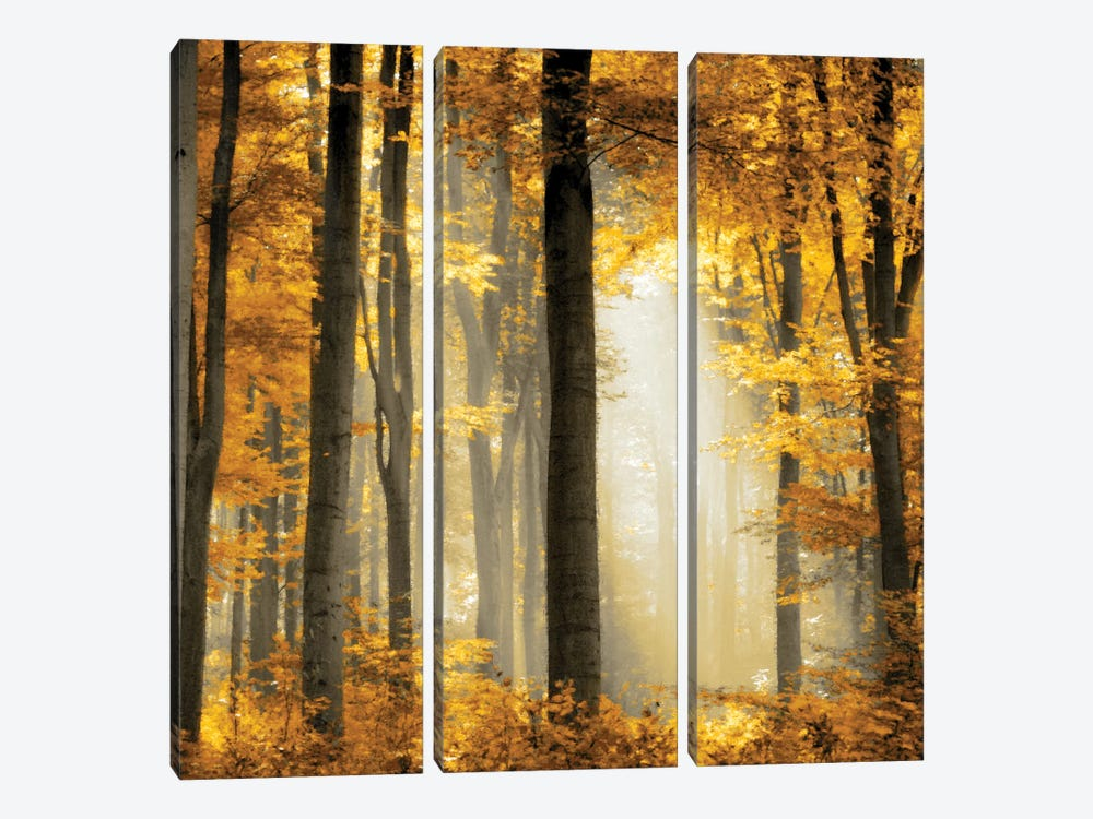 Sunlit Forest II by Derek Scott 3-piece Canvas Art Print