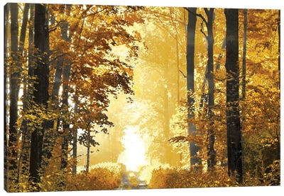Sunlit Path Canvas Print #DRK6